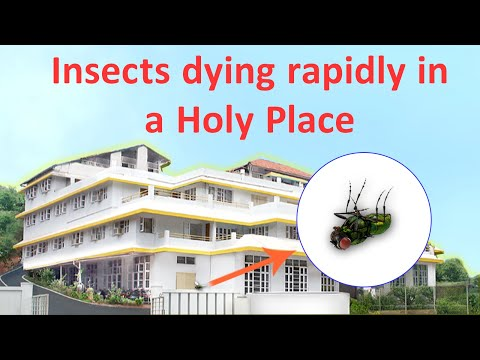 Why insects just happen to die on the premises of terror-accused Sanatan Sanstha