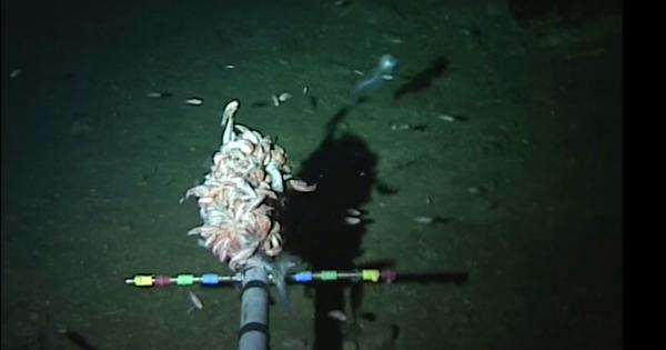 How we found world's deepest fish in the Mariana Trench – and why we must keep exploring