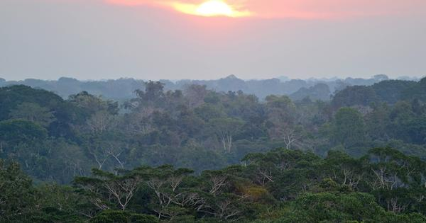 Amazon carbon sink is in decline as trees die off faster