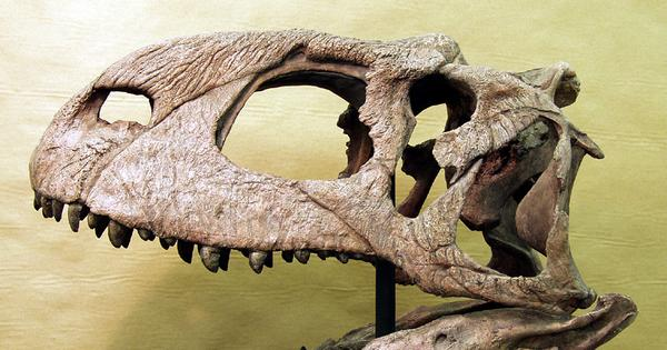 Rajasaurus narmadensis and other wonders: Five places in India to see ancient fossils