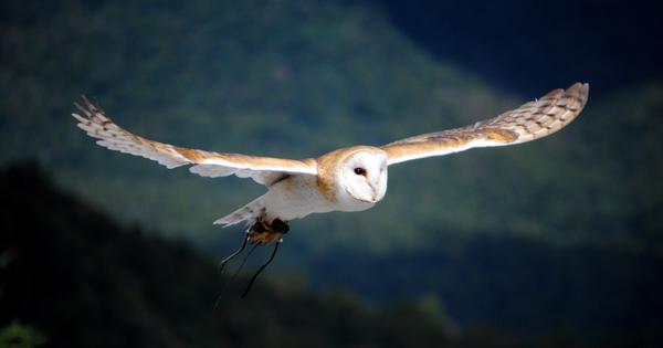Silent flights: How owls could help make wind turbines, computer fans and planes quieter