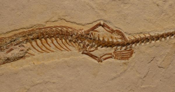 Fossil from Brazil sheds light on how snakes lost their legs