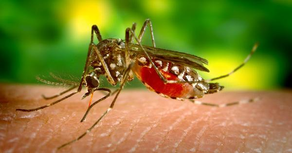 India ponders using GM mosquitoes to fight dengue – and climate change could make this necessary