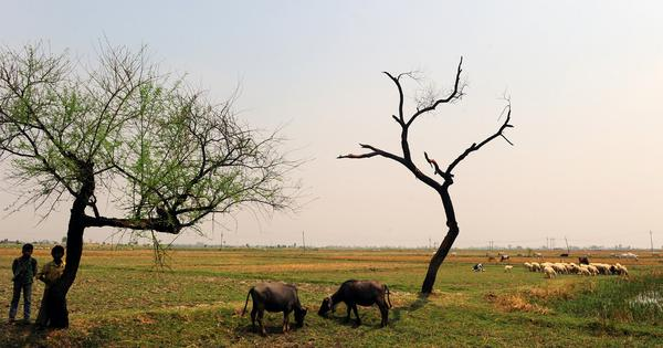 Will the rural focus of the Budget ease India's agrarian distress?