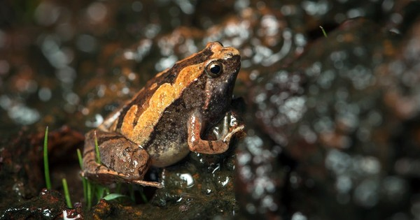 Why are new species of frog being discovered so often? Because there are so many of them