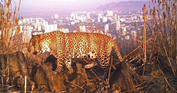 Rail corridor may not be routed through Mumbai's National Park, but that isn't much consolation