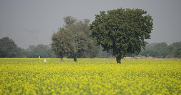 Why is the regulator for GM crops in India ignoring Supreme Court orders to ensure transparency