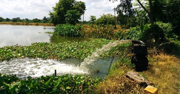 Kolkata's unique wetlands that treat sewage water are shrinking