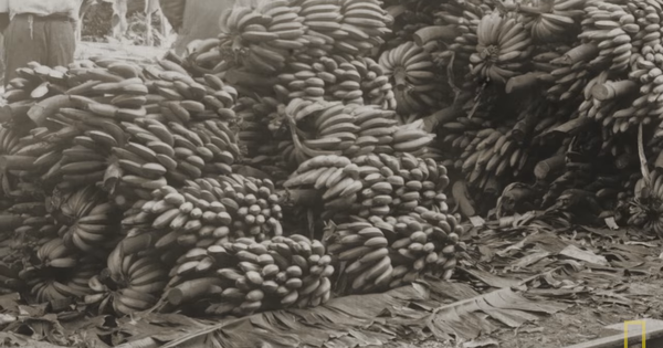 Watch: What the banana (which has aided two coups) you'll eat in the future will be like