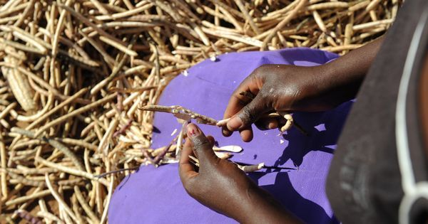 Africa's agriculture projects are sowing inequality, not food