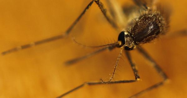 Malaria cases are falling but so are funds to control it, says WHO