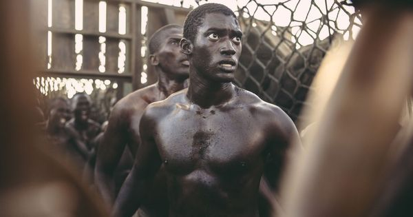 The link between films about 'a dog's life' and Oscar-winning sagas of racism and slavery