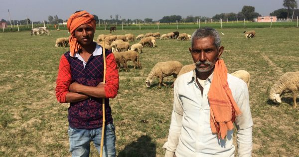 Moving up: How caste shapes the choice of work in one Uttar Pradesh village
