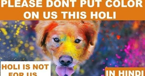 Watch: How Holi could harm your pet – and how to avoid that