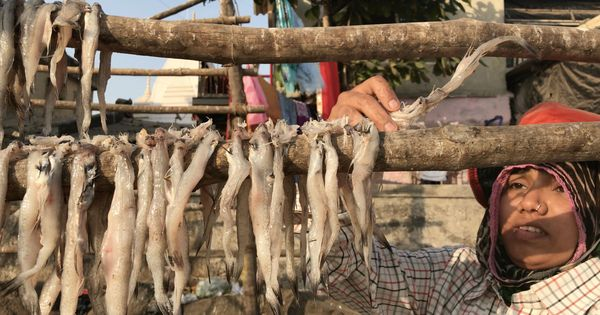Watch: Why the Bombay duck is not called a fish (and what love can do to have a ban lifted)