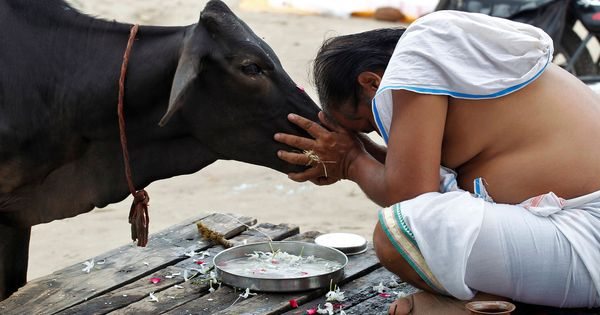 'Hindus are 100% responsible for cow slaughter': A sanyasi freedom fighter's claim still holds true