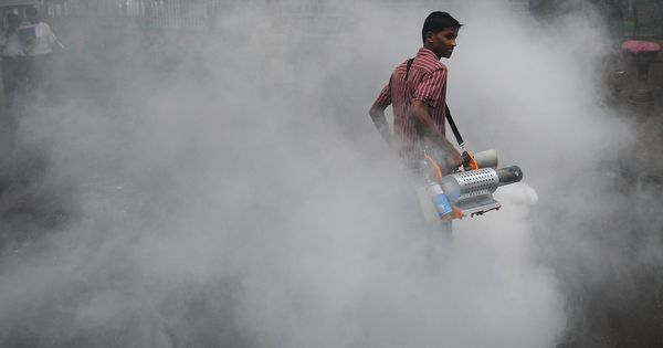 Delhi High Court orders action against municipal officials over mosquito breeding, lack of hygiene