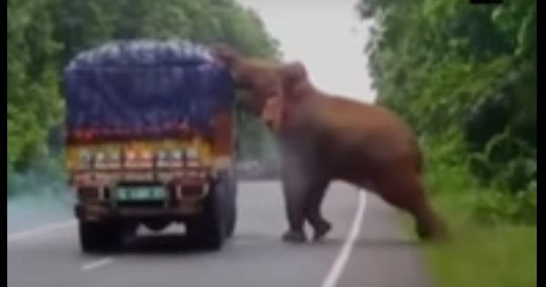 Caught on camera: Elephant stops traffic, pilfers potatoes, and snacks on a road in West Bengal