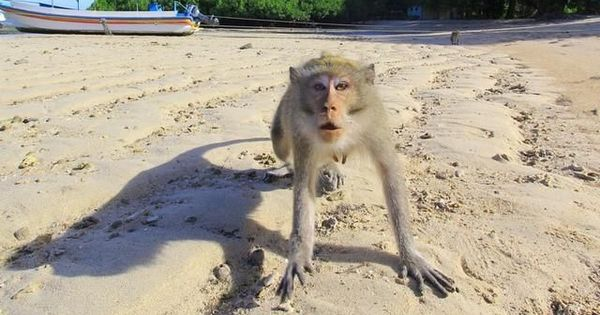 Video: Indonesia deploys task force to fight monkeys that are terrorizing villagers