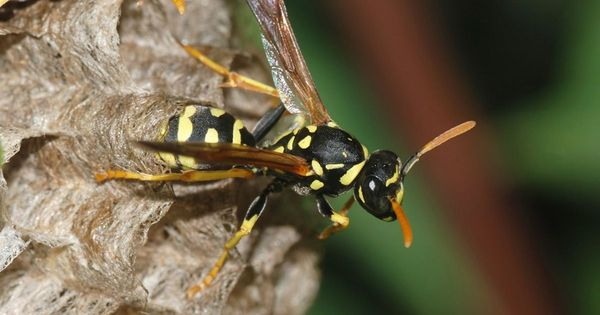 We asked people to kill wasps for science – here's why it (and the resultant abuse) was worthwhile