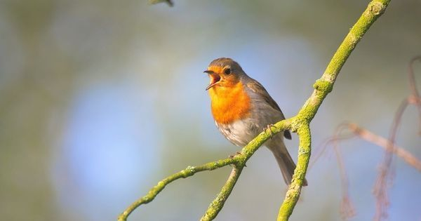 What songbirds could teach us about constructive tweeting