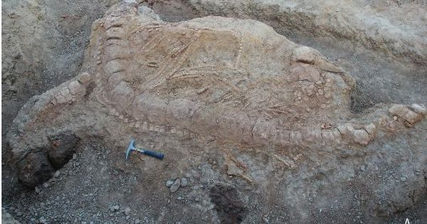 Scientists discover Jurassic-era fossil of 'fish lizard' in Gujarat's Kutch desert