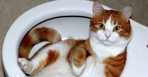 Are cats liquid? Answering this question won me an Ig Nobel