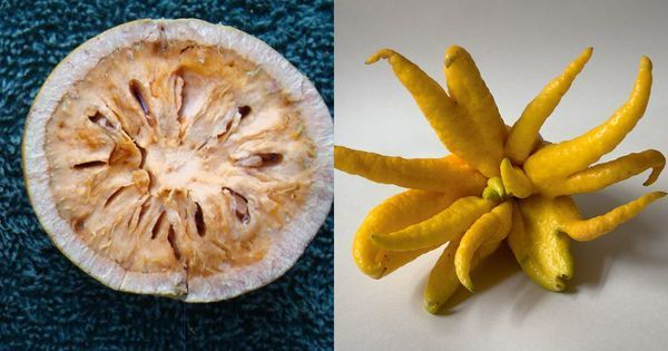 Chuck that kiwi: It's time Indian restaurants and homes try these mouth-watering native fruit