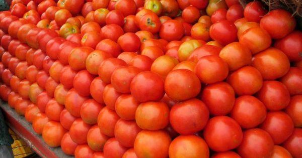 Tomato prices soar across country after crop damage in Madhya Pradesh, Karnataka