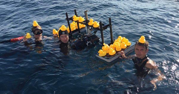 BBC film Blue Planet II criticised for planting plastic ducks in the sea for segment on pollution