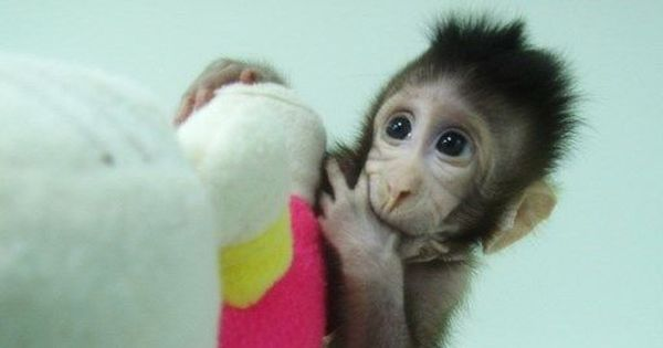 Chinese scientists clone monkeys, say they have broken a technical barrier in science