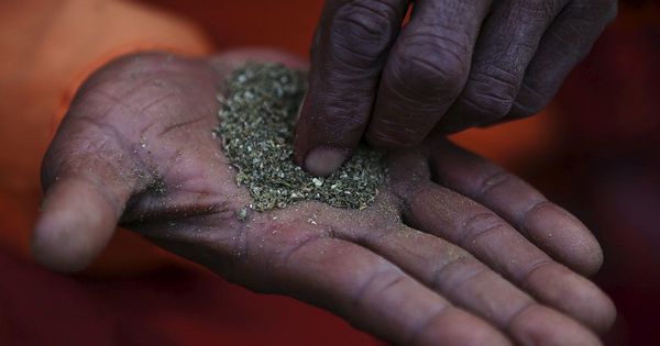 Keep rollin': Delhi, Mumbai among the top 10 cannabis-consuming cities in the world