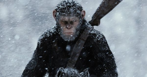 The popular use of primates in movies has increased their demand as pets, fuelling an illegal trade