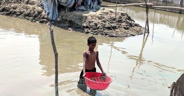Japanese appetite drives crab farming in the Sundarbans
