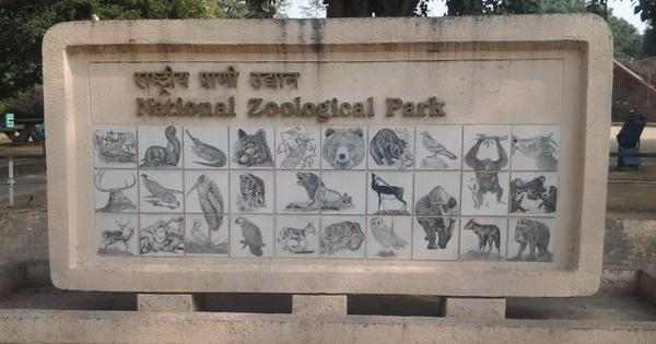 Delhi's zoo hid the deaths of 50 animals in 2017 to show dip in mortality rate: The Indian Express