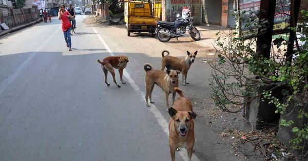 Image result for street dogs kill 5 year kid in sangrur