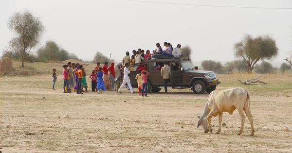 Looking for Modi: Cows, lies and thirst in a border district of Rajasthan