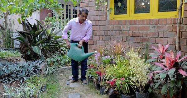 As Indian cities grow congested, the only space left for gardens is up – on rooftops