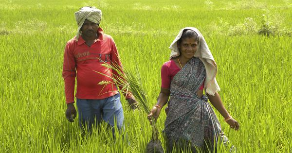 Andhra Pradesh's push for chemical-free farming inspires other states