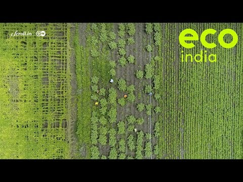 Eco India, Season Premiere: Why our unsustainable farming practices require an urgent rethink