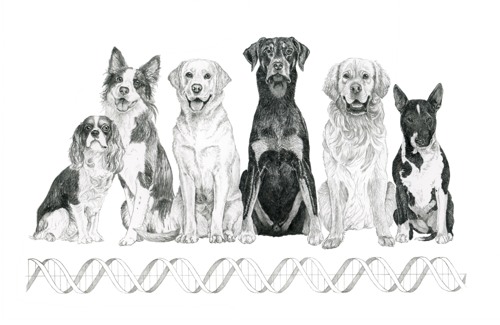 Learning From Dogs What Triggers And Soothes Human Obsessive Compulsive Disorder