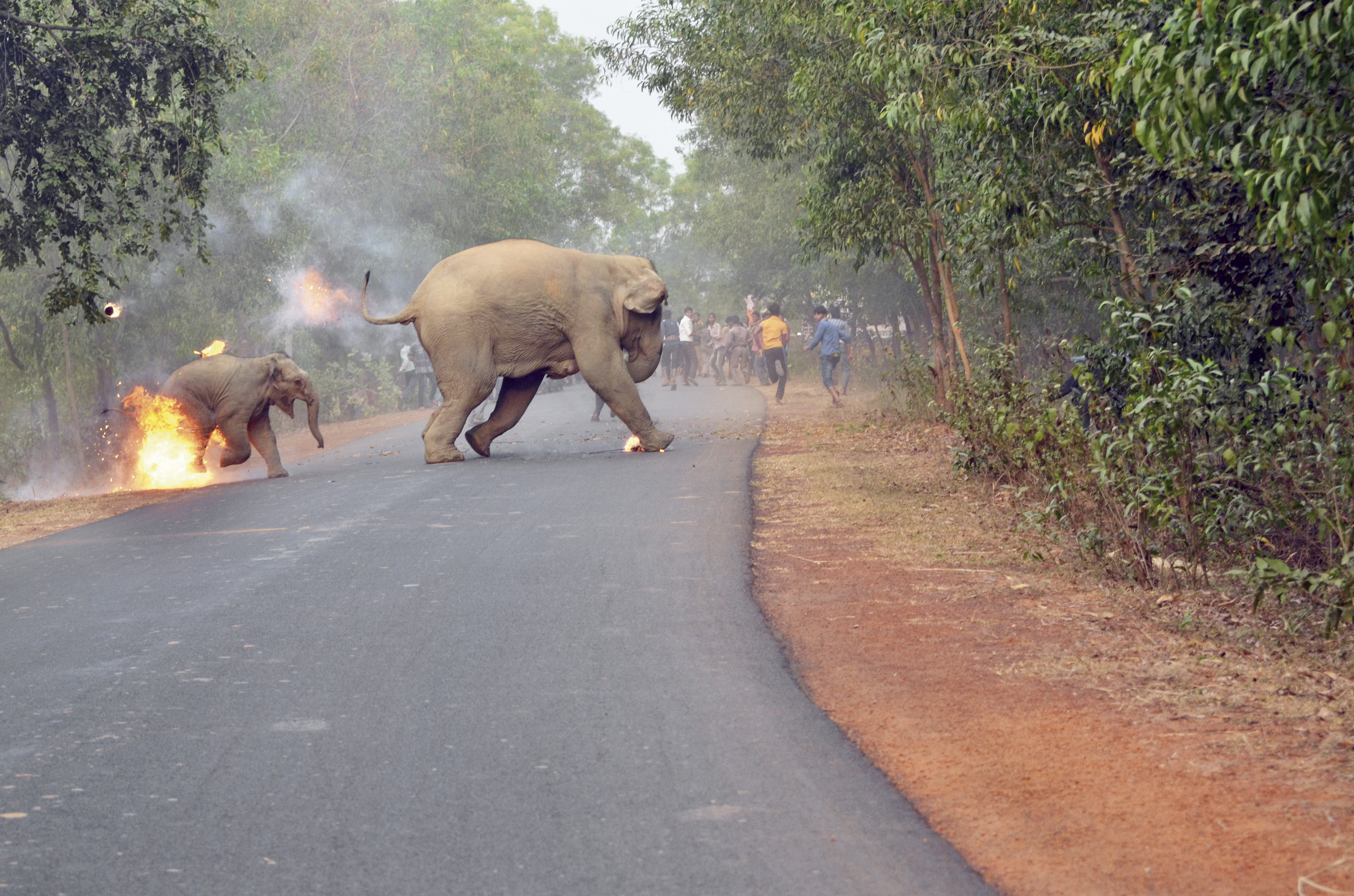 Sanctuary Wildlife Photography Awards 2017 Award For Picture Showing Human Elephant Conflict