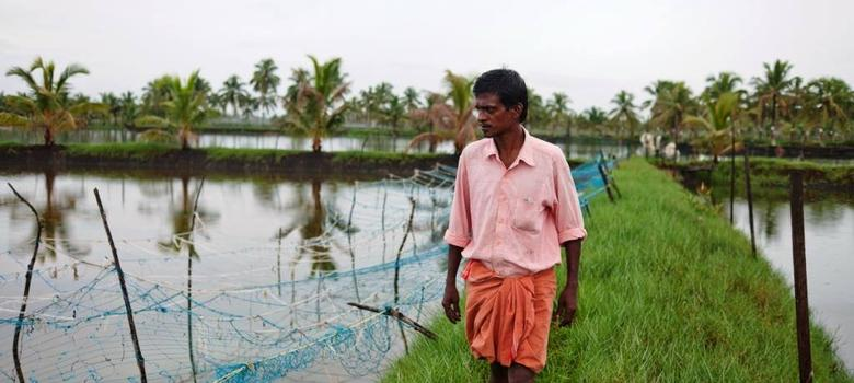 In Kerala, farmers fight to preserve a rare variety of salt-resistant rice – and the ecosystem