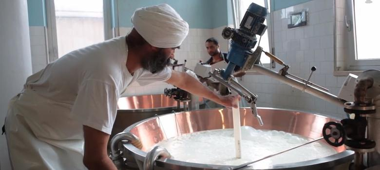 Video: The Sikhs who make Italy's famous Grana Padano cheese