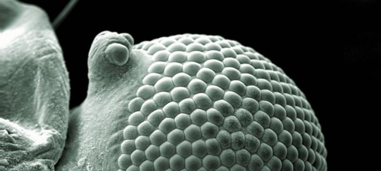 The best medical images of the year: a mesmerising nano-world where science becomes art