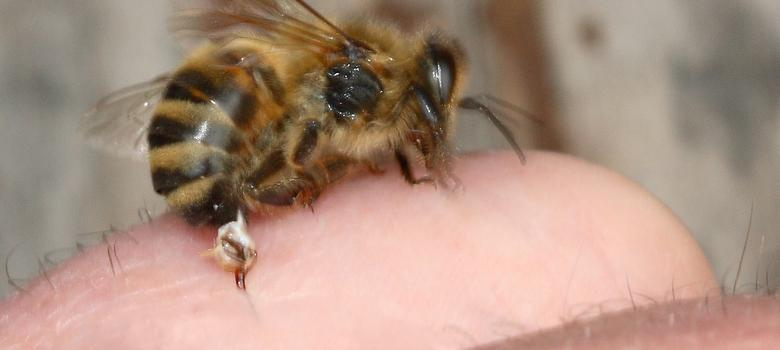 How a bee sting saved my life: poison as medicine