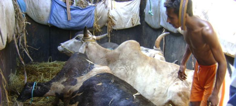 Punjab's cow vigilantes have wreaked havoc on its dairy business