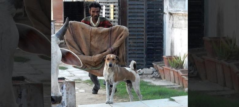 Killing isn't the answer: Kerala must learn from Jaipur how to control stray dogs
