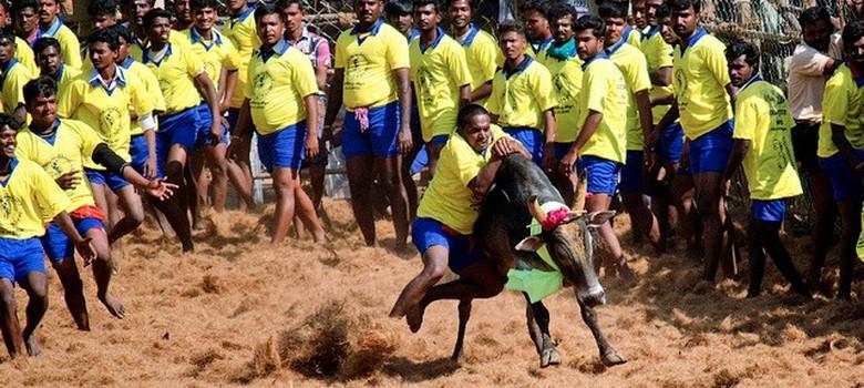How the jallikattu ban will hurt cattle breeding: A farmer's point of view