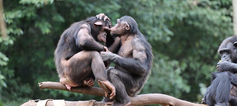 Why did sex evolve? Researchers edge closer to solving longstanding mystery
